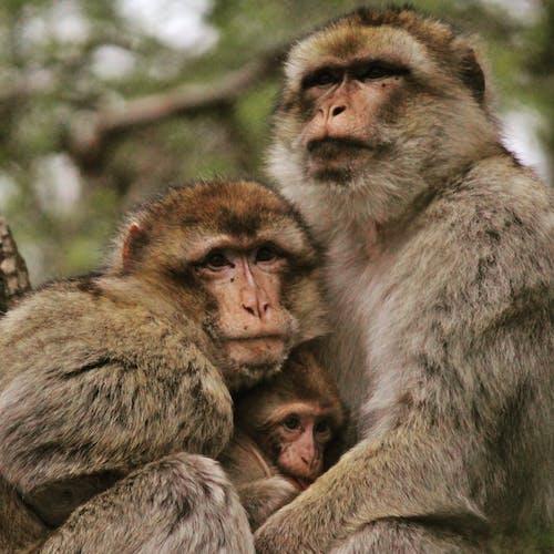 Δωρεάν στοκ φωτογραφιών με #monkey #family #nature #wildlife
