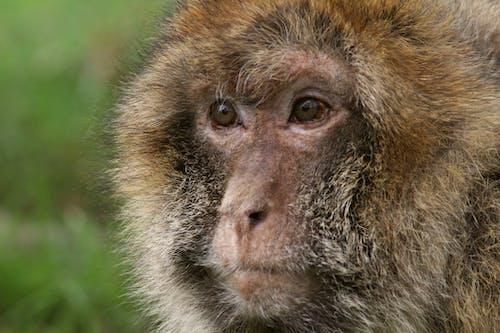 Foto stok gratis #monkey #nature #wildlife