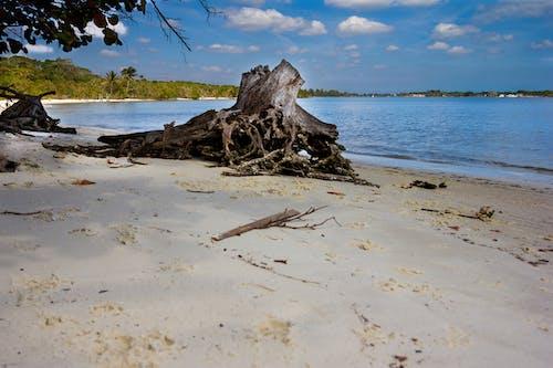 คลังภาพถ่ายฟรี ของ ชายหาด, ทราย, ท้องฟ้า