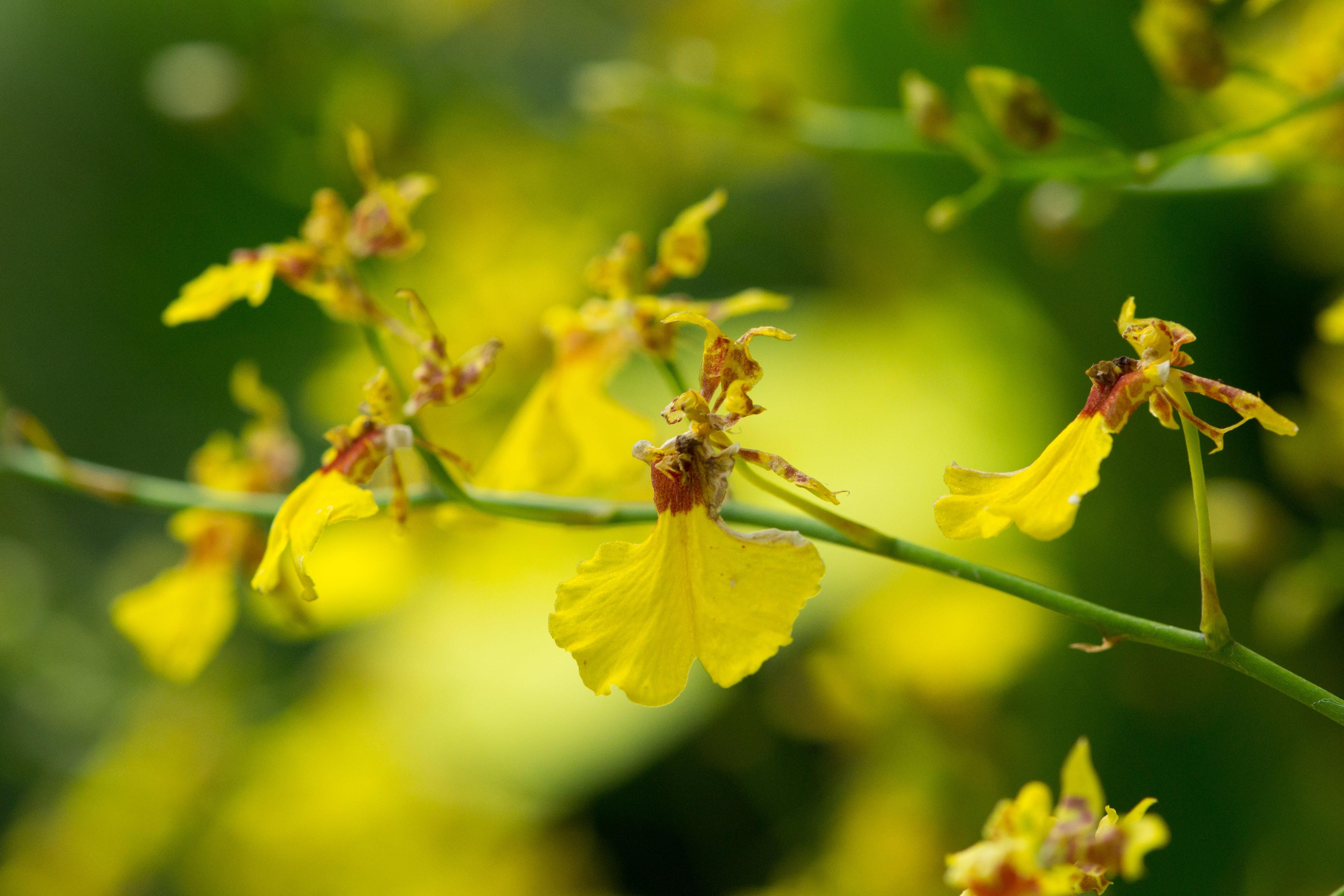 꽃밭, 난초, 노란 꽃, 노란색의 무료 스톡 사진