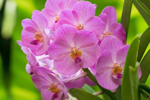 Безкоштовне стокове фото на тему «букет, квіти, квітник, красиві квіти»