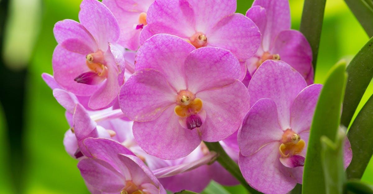 вряд вызовет садовые цветы похожие на орхидеи фото садовых скамеек