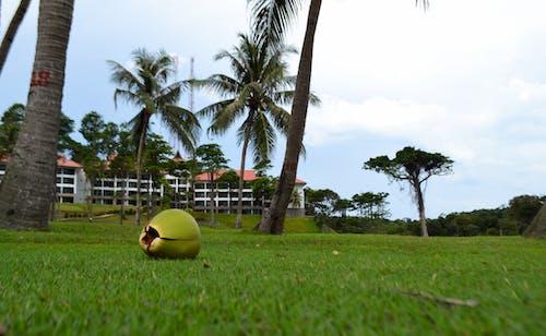Foto profissional grátis de campina, campo de grama, campo verde, coco