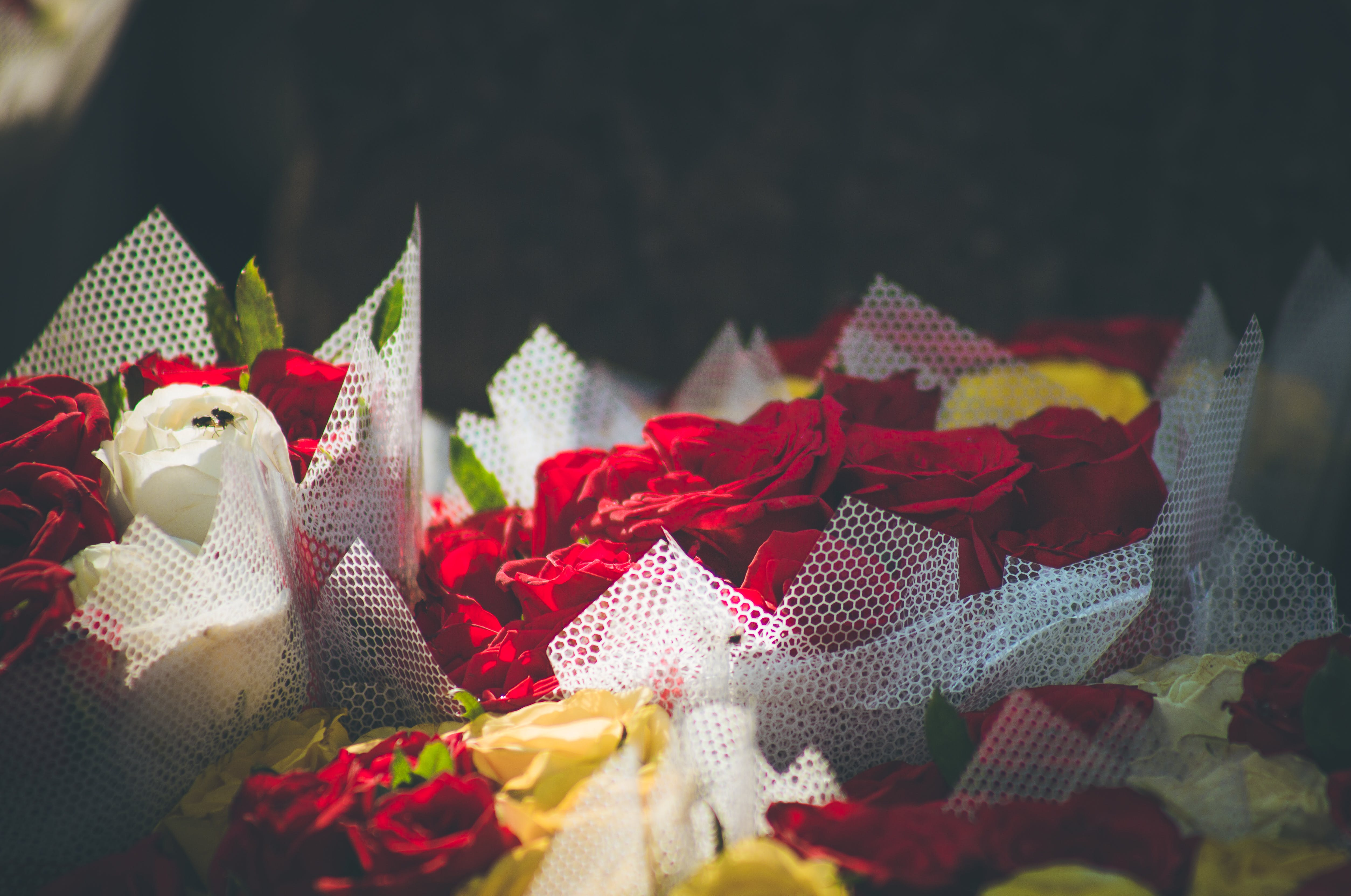 Free stock photo of beautiful flowers, flower bouquets