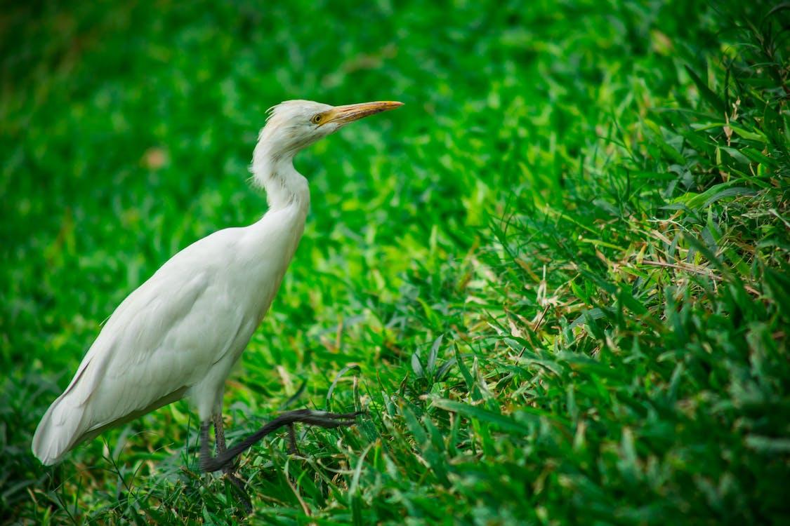 White Bird on Grass