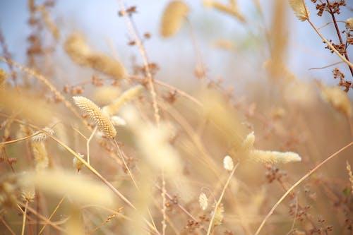 Free stock photo of arid, bushes, dry