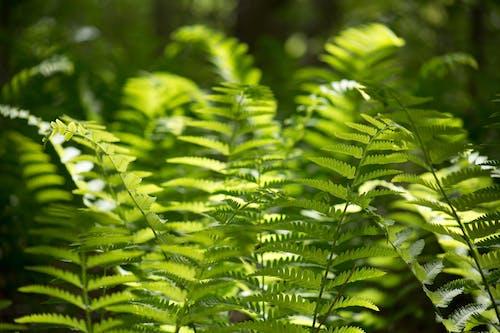 Foto d'estoc gratuïta de fulles, natura, plantes, primer pla