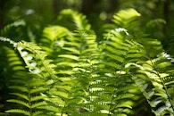 nature, leaves, plants