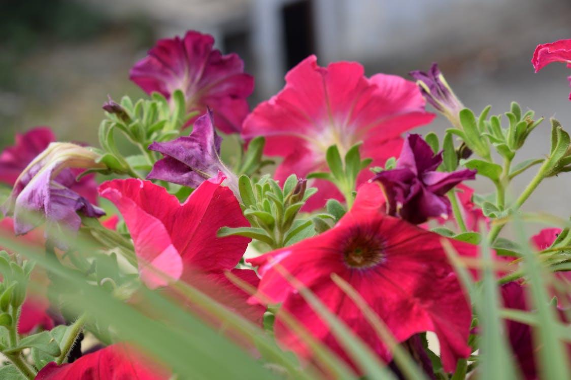 Foto Gratuita Di Fiori Bellissimi Fiori Multicolori Mazzo