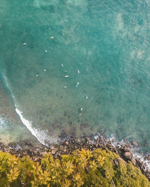 Gratis lagerfoto af baggrund, bølge, ferie, grøn