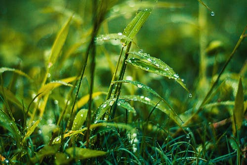 Бесплатное стоковое фото с газон, заводы, зеленый, капельки
