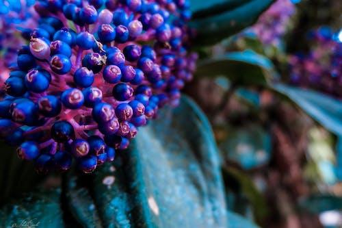 Immagine gratuita di azzurro, colorato, fiori, fotografia della natura