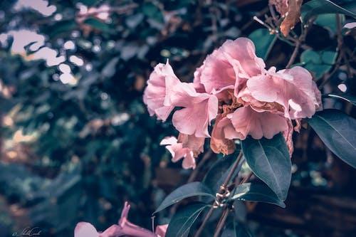 Immagine gratuita di colorato, fiori, fotografia della natura, macrofotografia