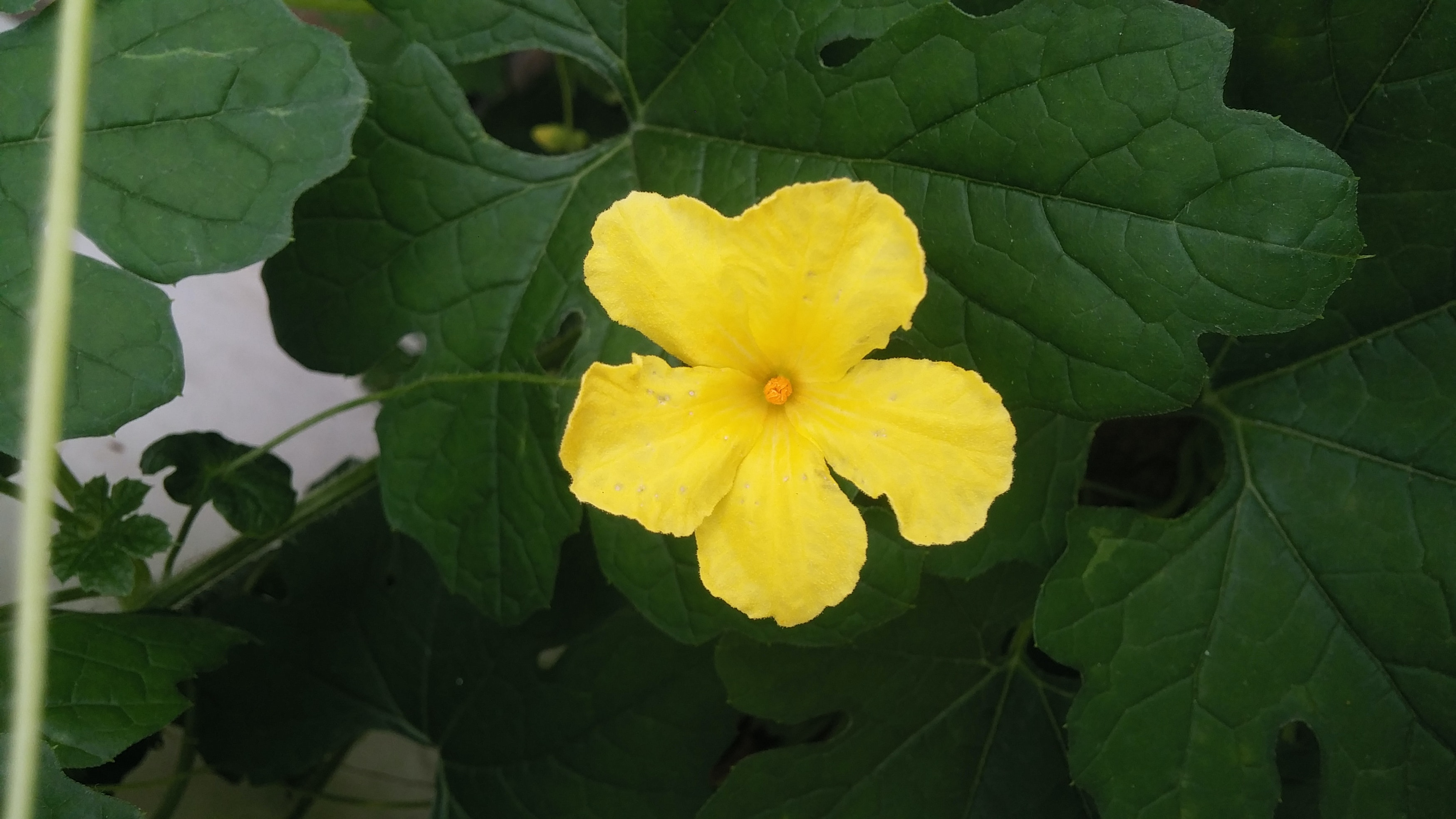 Free stock photo of beautiful flowers flowers yellow free download izmirmasajfo