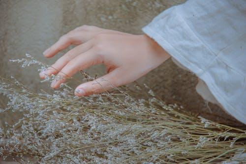 植物附近的手的特寫攝影
