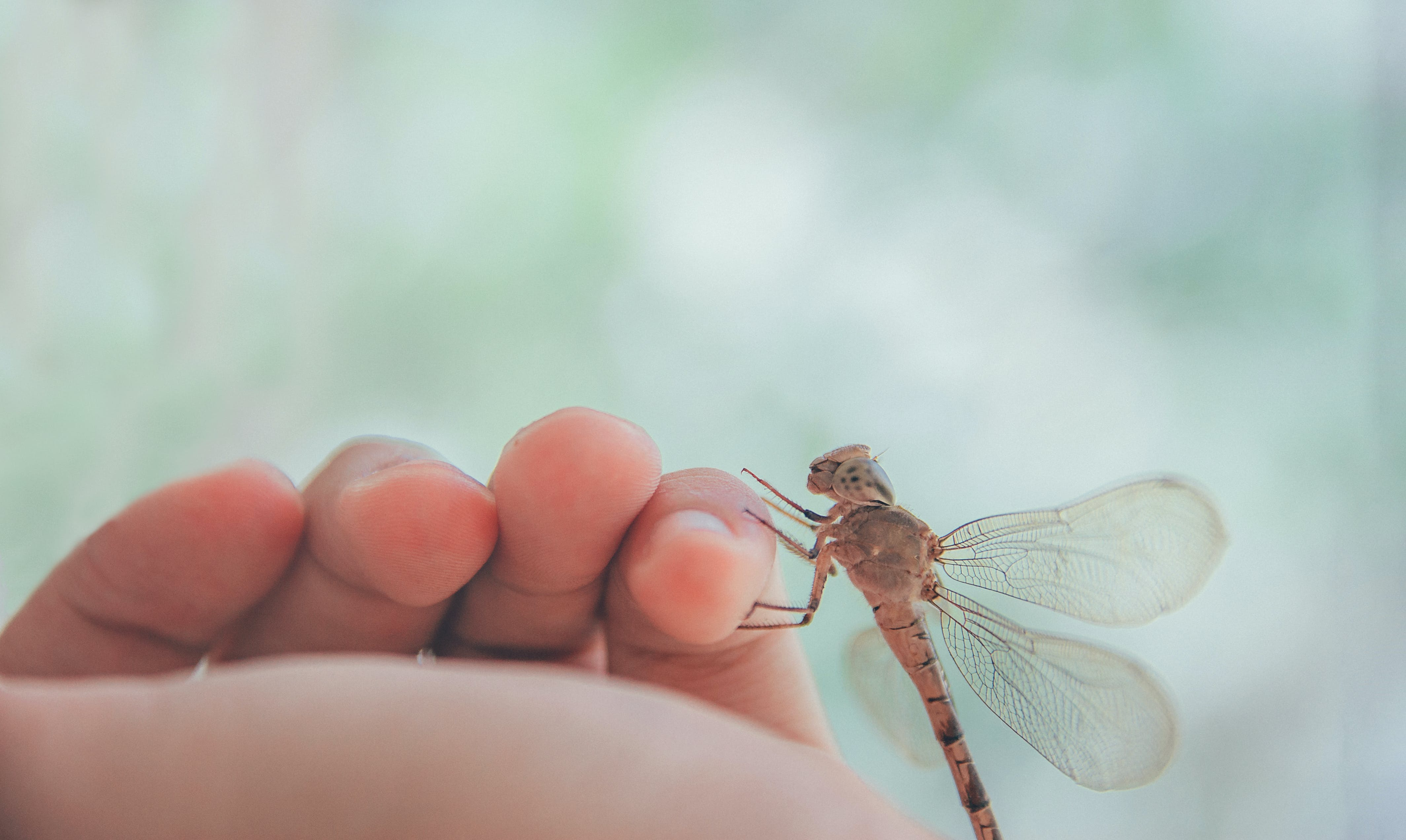 Brown Dragonfly on Human Left Pinky Finger
