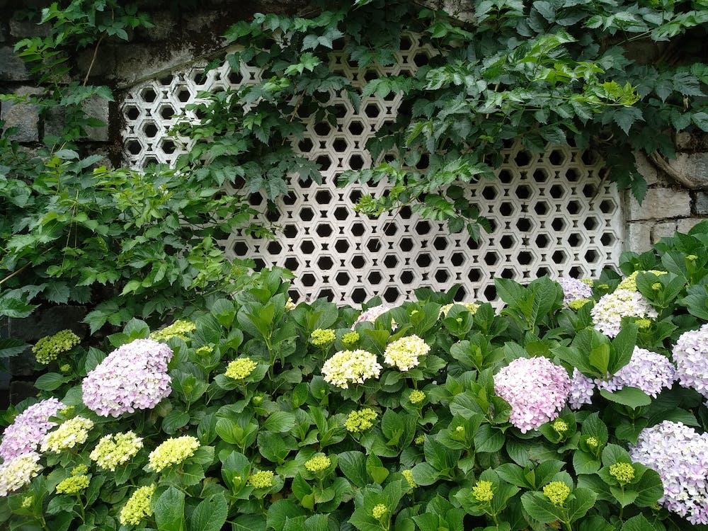 beautiful flowers, home garden