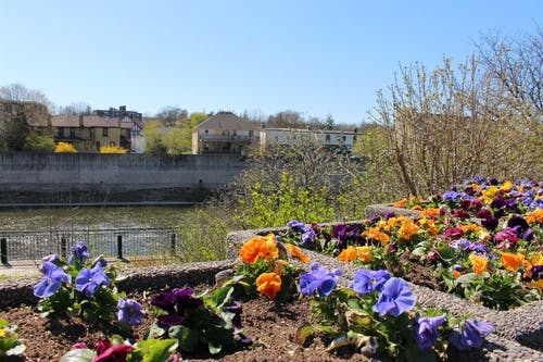 Photos gratuites de fleur, fleurs, nature