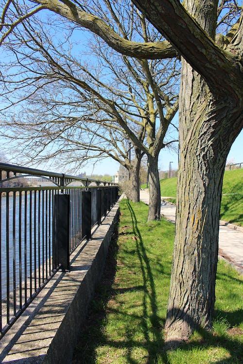 Photos gratuites de arbre, nature