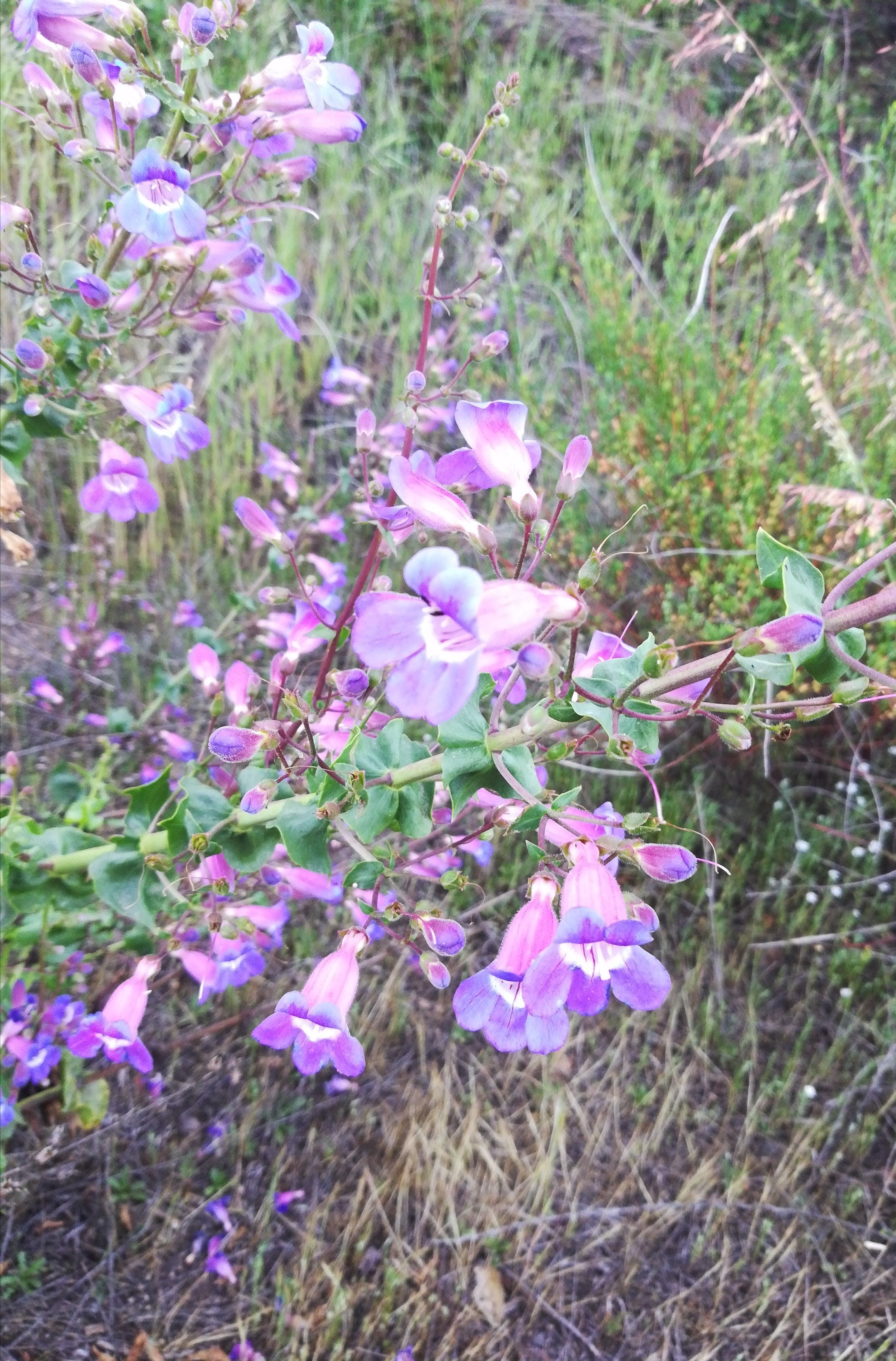 beautiful flowers, beauty, trails