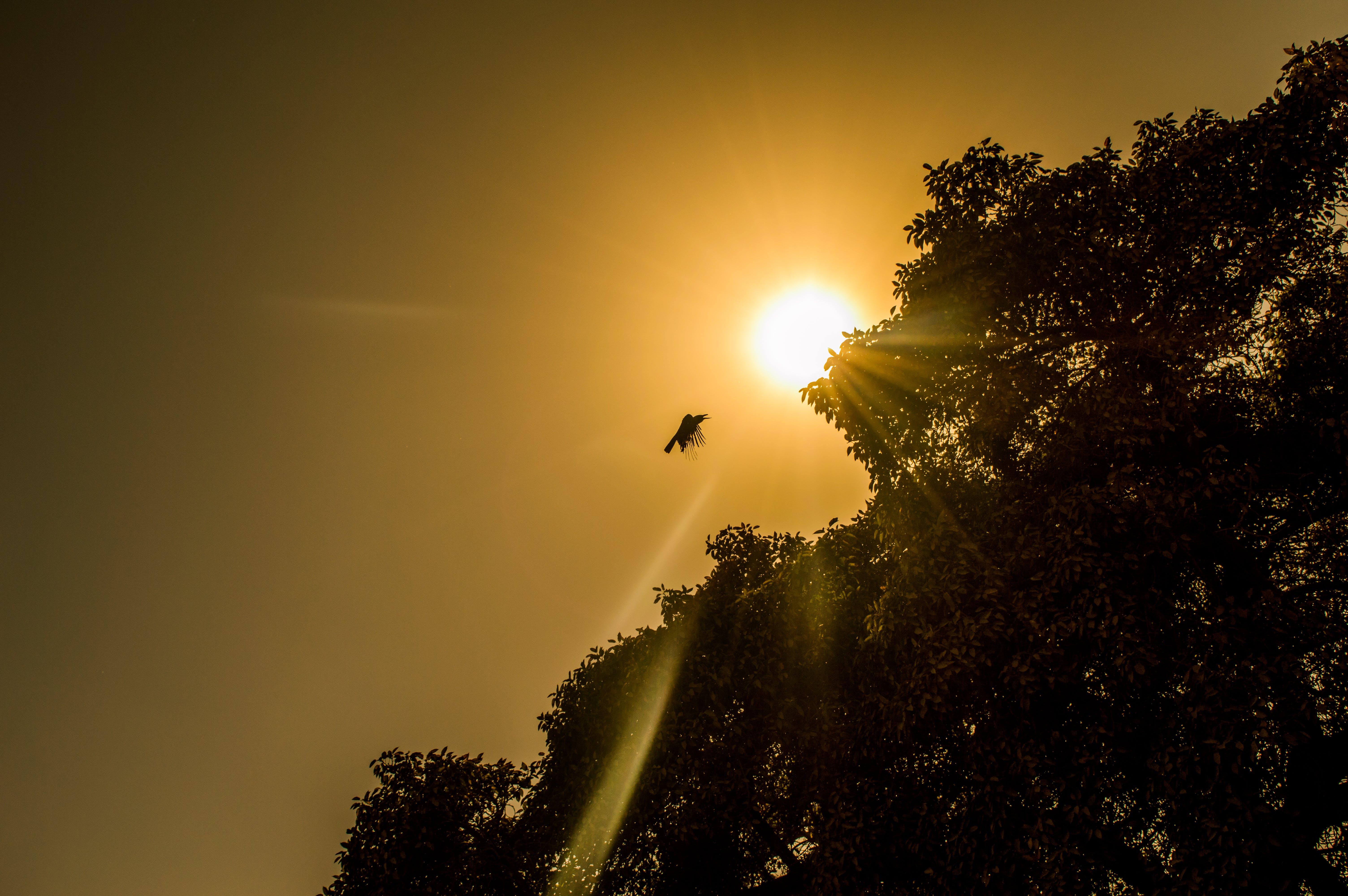 Low Angle Photography of Bird Near Tree