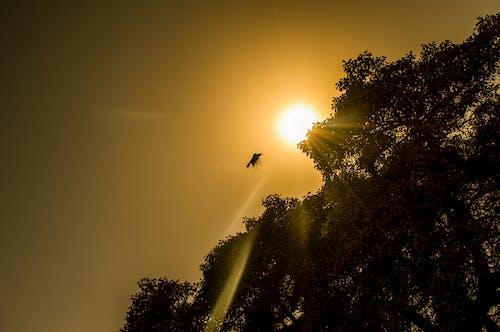 Бесплатное стоковое фото с вечер, восход, деревья, дикий