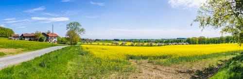 乾草地, 地平線, 增長, 夏天 的 免費圖庫相片
