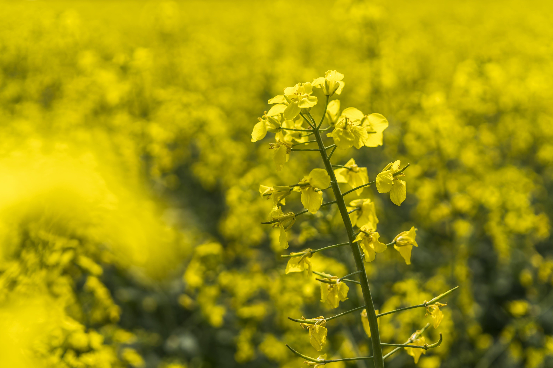 Gratis lagerfoto af afgrøde, blomst, blomster, farve