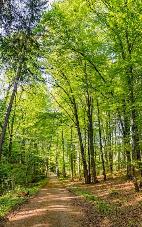 光, 公園, 天性, 季節 的 免費圖庫相片