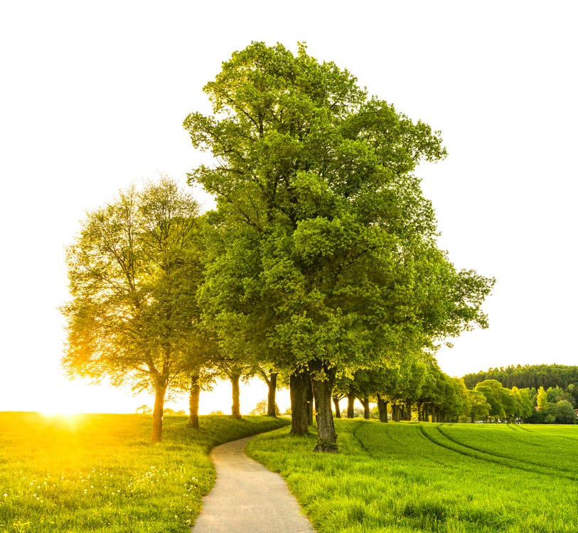вечнозеленый, дерево, деревья