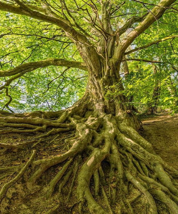 ветвь, дерево, деревья
