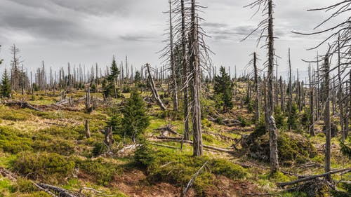 天性, 山, 常綠, 日光 的 免費圖庫相片