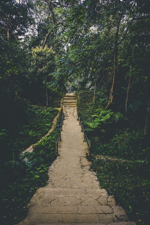 arbres, aventure, bois