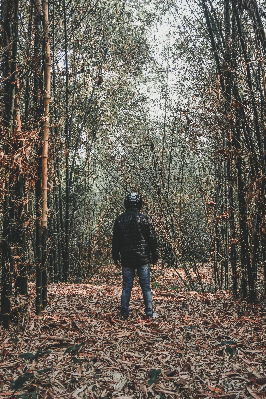 Kostenloses Stock Foto zu äste, baum, bäume, baumstamm