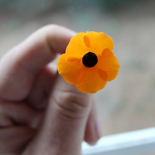 Безкоштовне стокове фото на тему «жовтий, квітка, Природа»