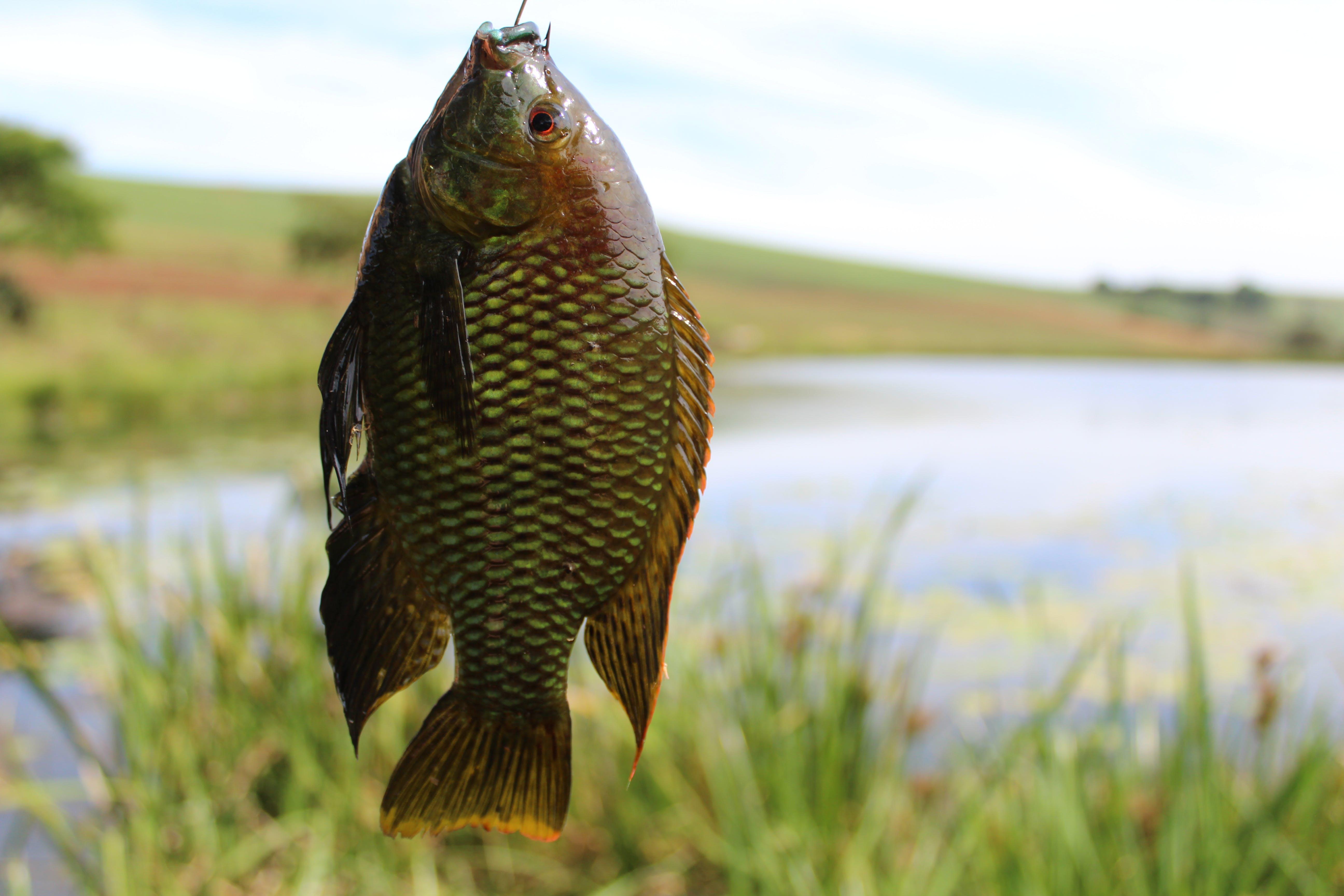 Kostenloses Stock Foto zu #tierwelt, angeln, fisch, natur