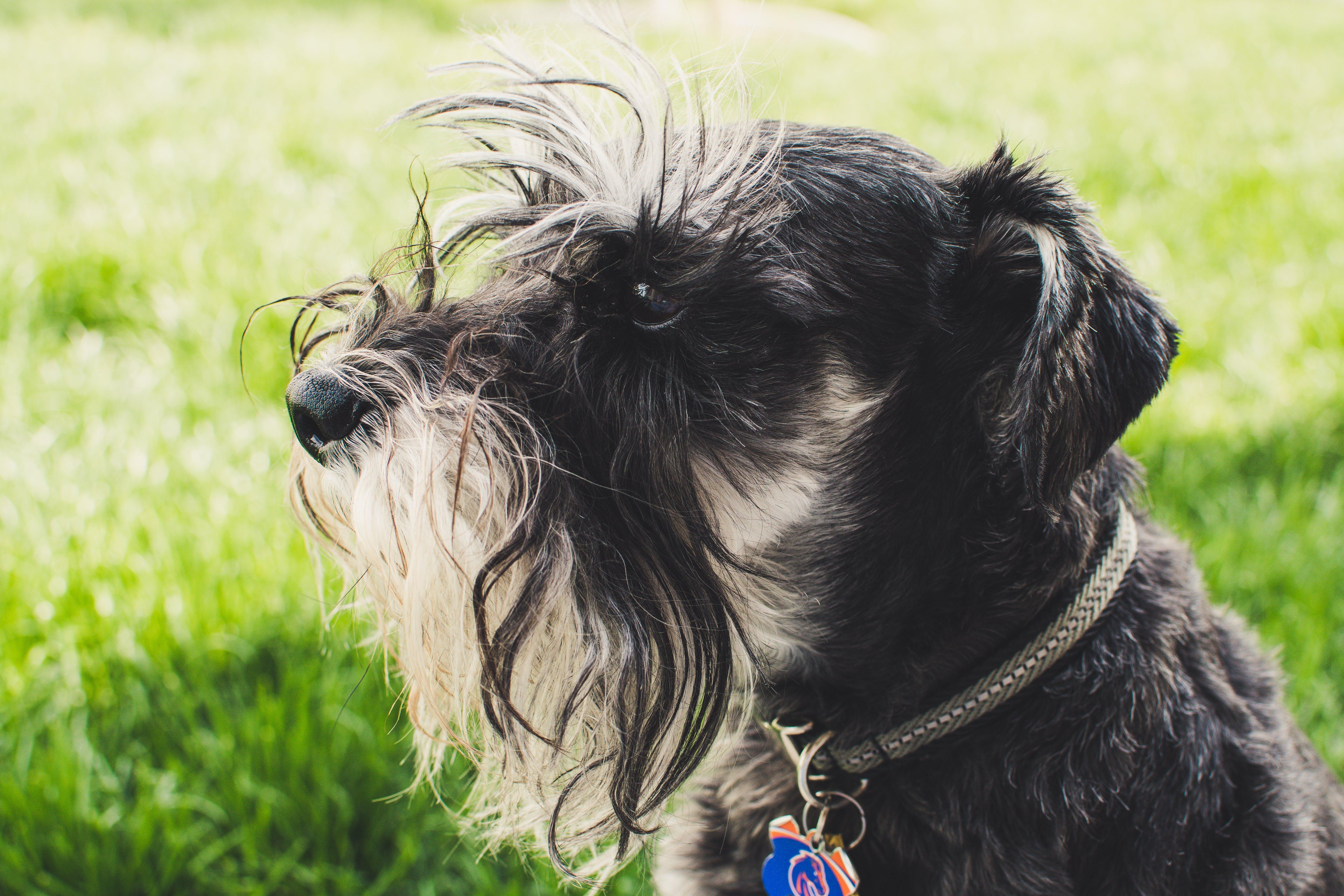 Photo of Long-coated White and Black Dog