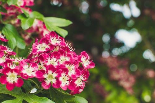 Foto profissional grátis de ao ar livre, atraente, aumento, botânico