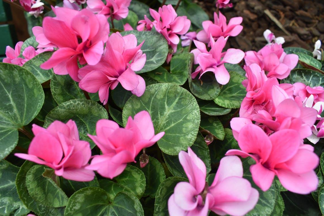 Photos gratuites de été, fleur, fleur rose
