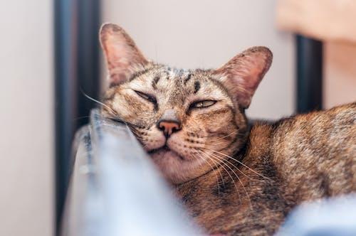 ネコの無料の写真素材