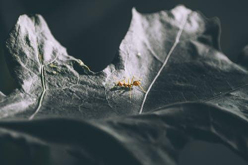 蟻の無料の写真素材
