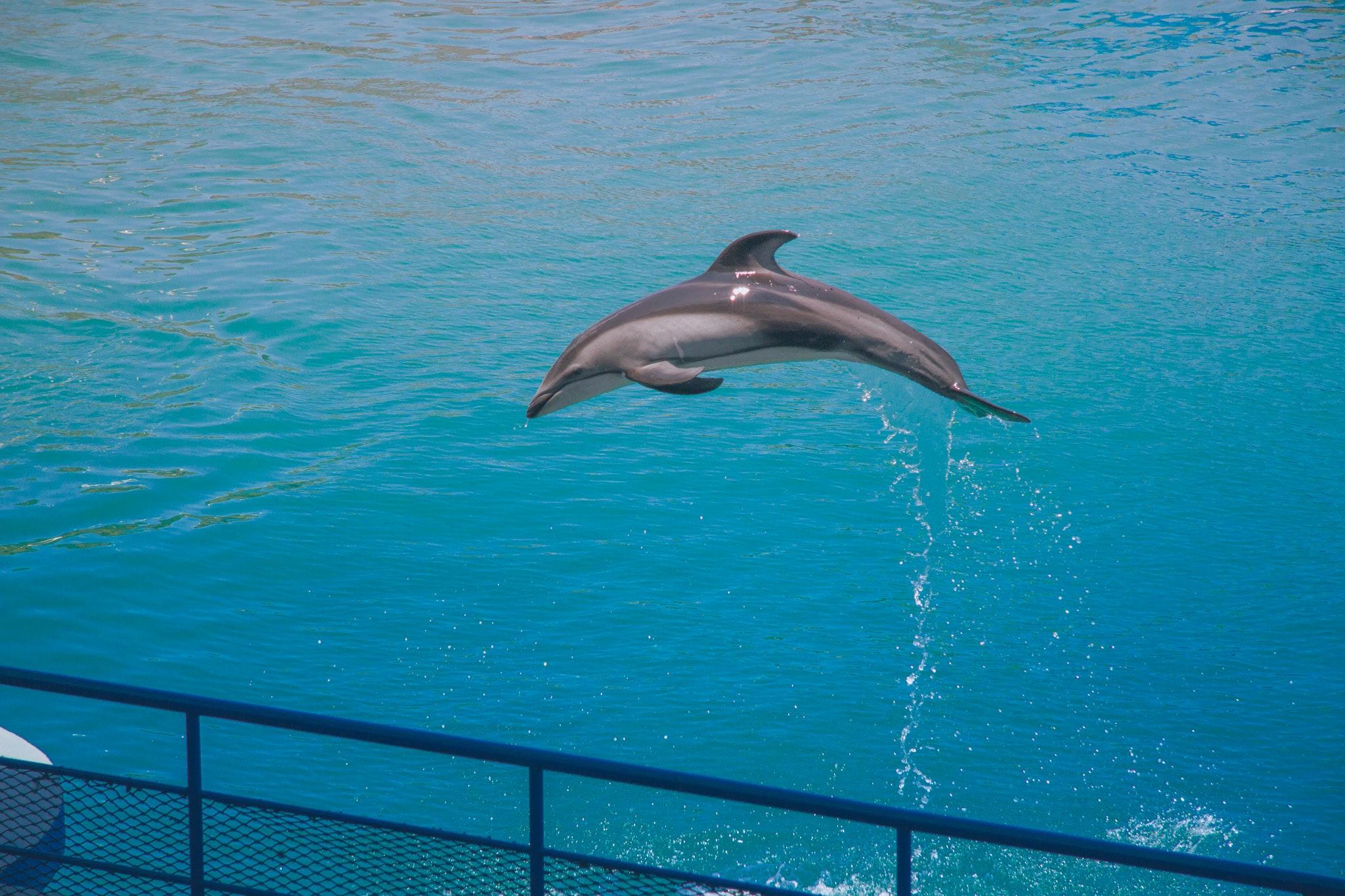 91 Koleksi Gambar Ikan Lumba Lumba Lucu HD