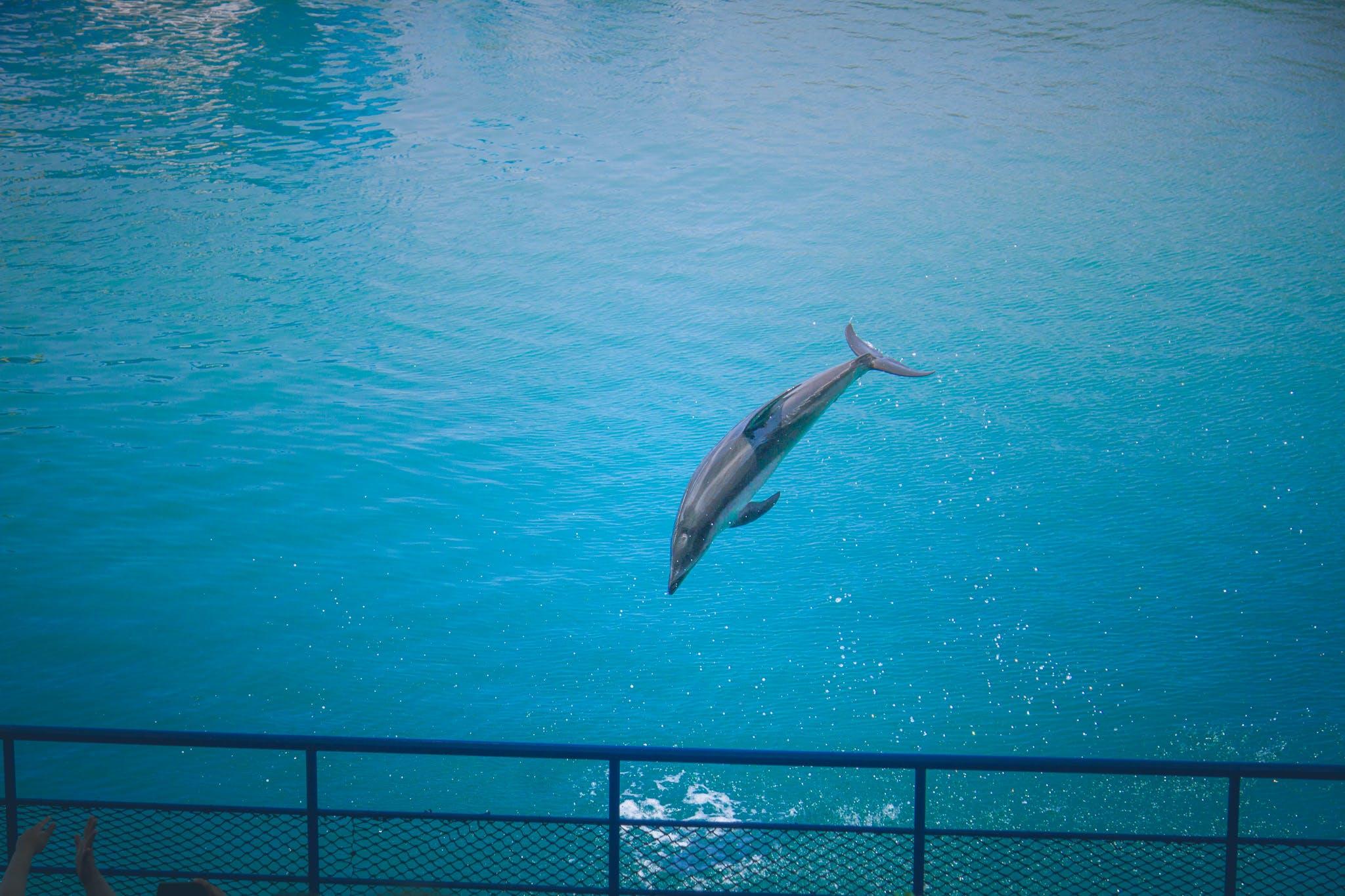 Free stock photo of animal close-up  cute  dolphin  fish  sea  underwa