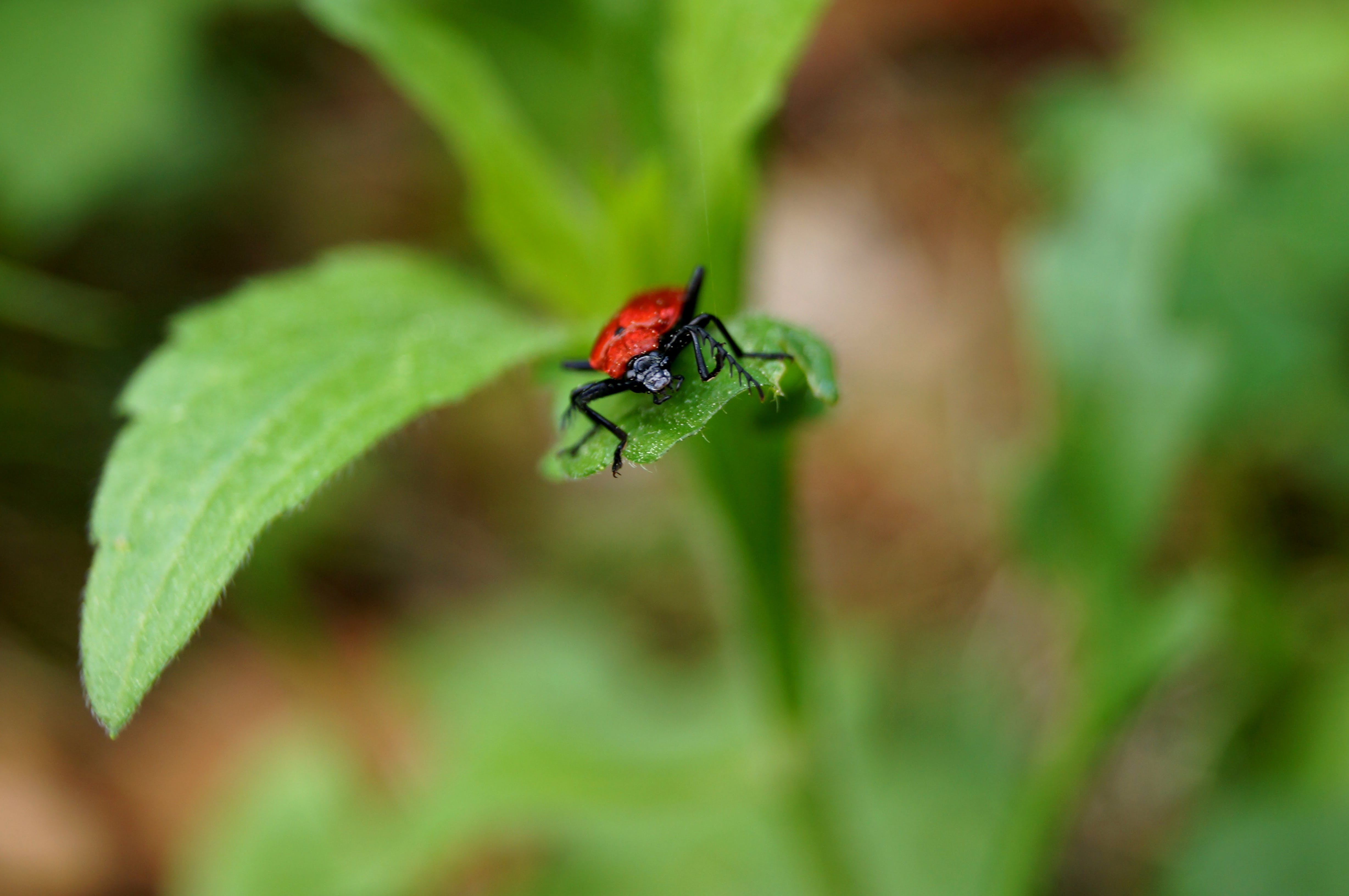 Free stock photo of beetle, nature, plant