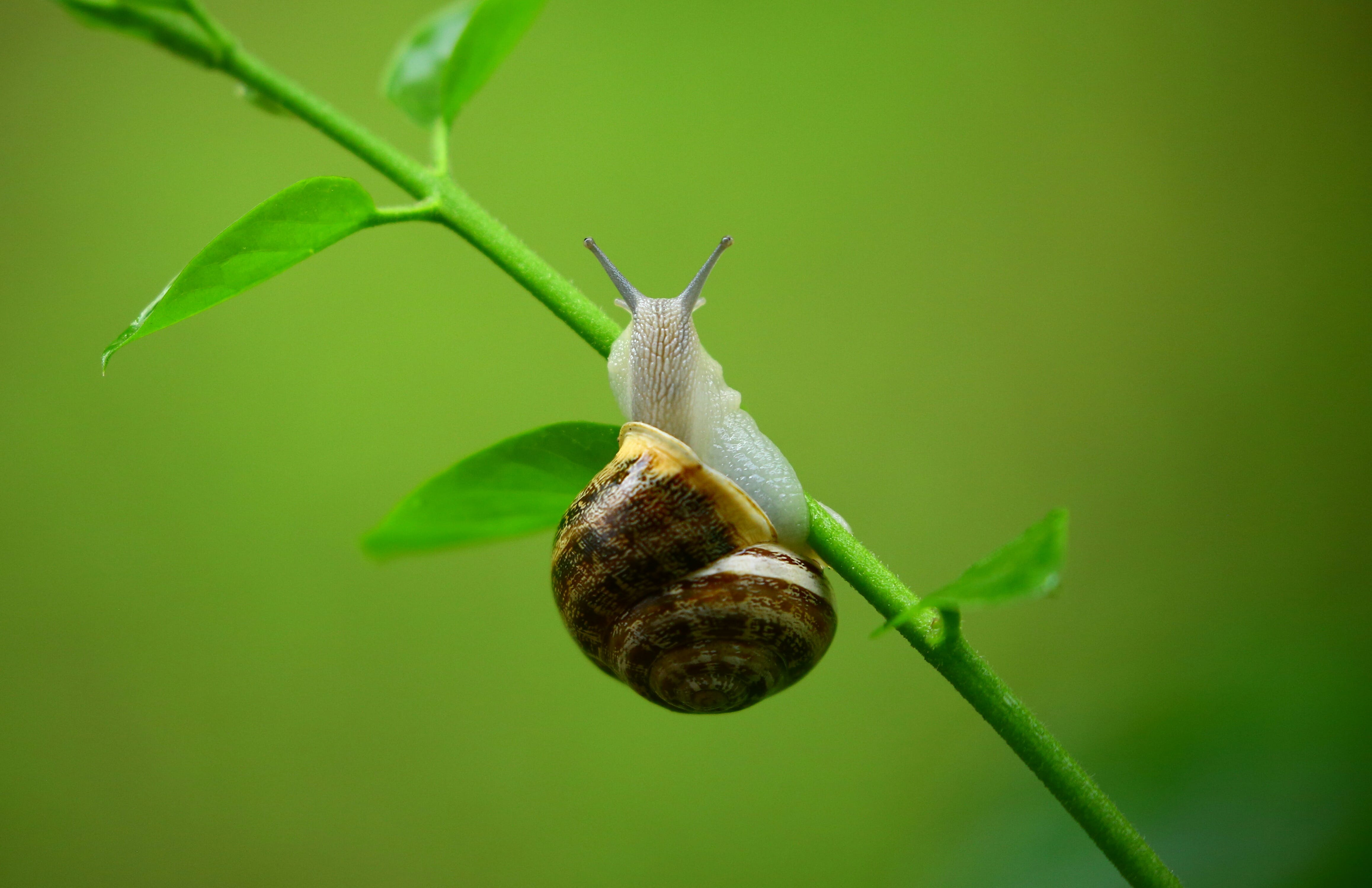Brown and Gray Snail on Green Plant Branch