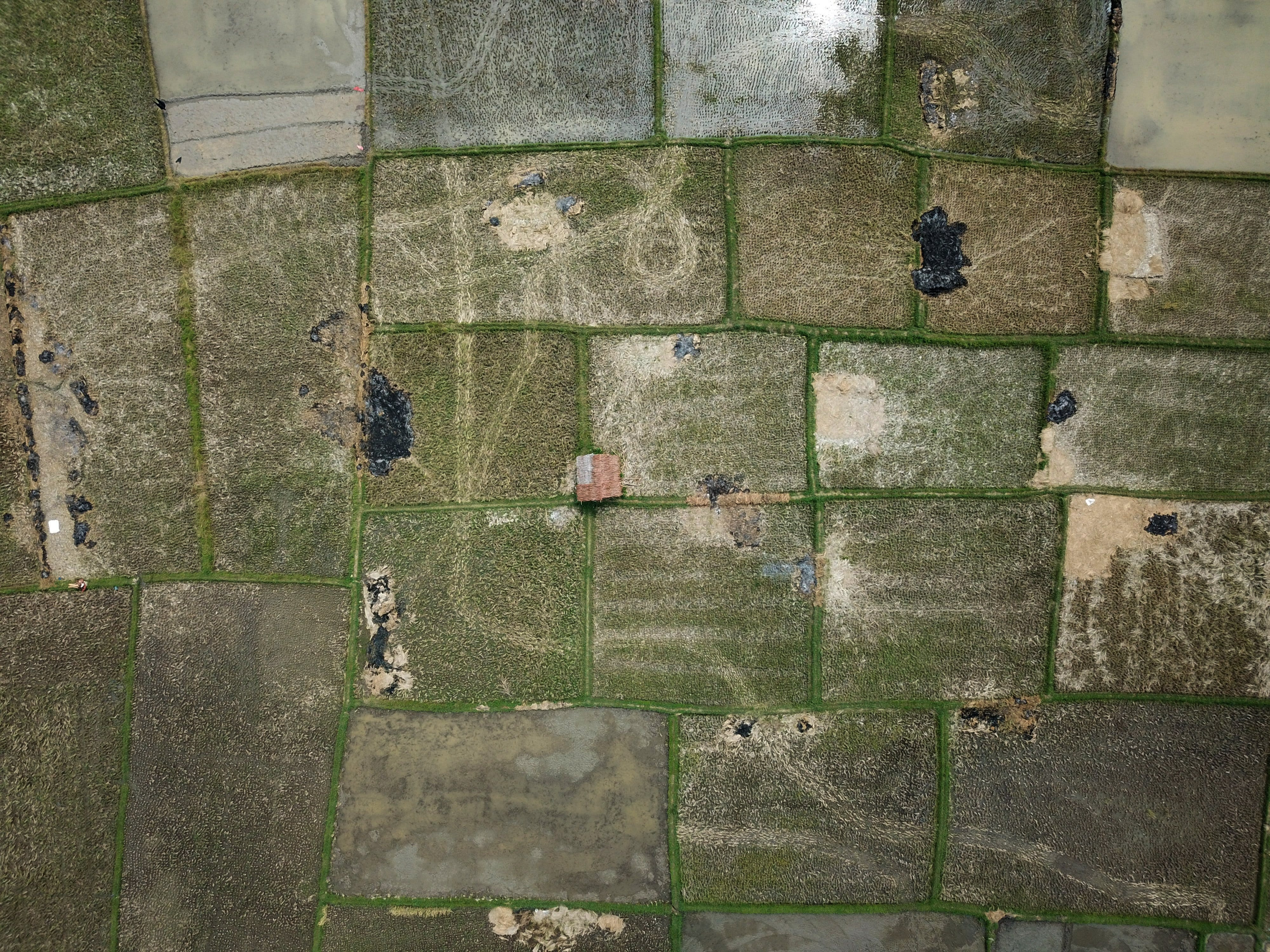 Aerial Photography of Green Grass Field