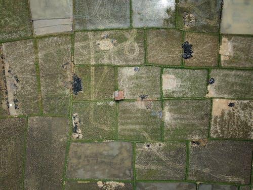下田, 屋頂, 戶外, 田 的 免費圖庫相片