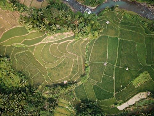 下田, 印尼, 增長, 夏天 的 免費圖庫相片