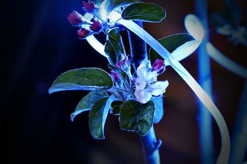 Δωρεάν στοκ φωτογραφιών με άνθος μηλιάς