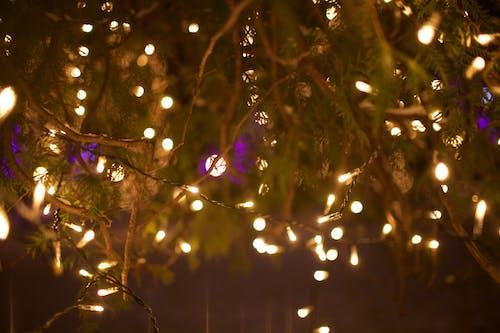 Foto d'estoc gratuïta de arbre, clareja, daurat, decoració nadalenca